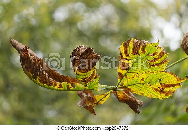 autumn leaf - csp23475721