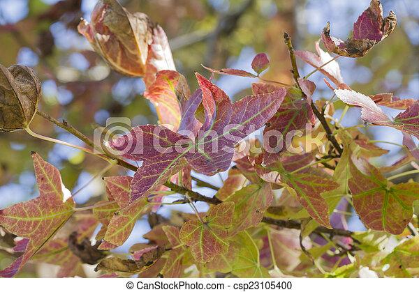 autumn leaf - csp23105400