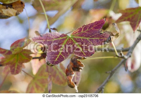 autumn leaf - csp23105706