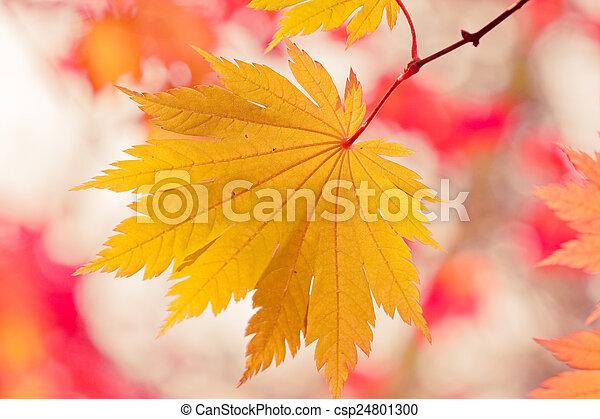 Autumn Leaf - csp24801300