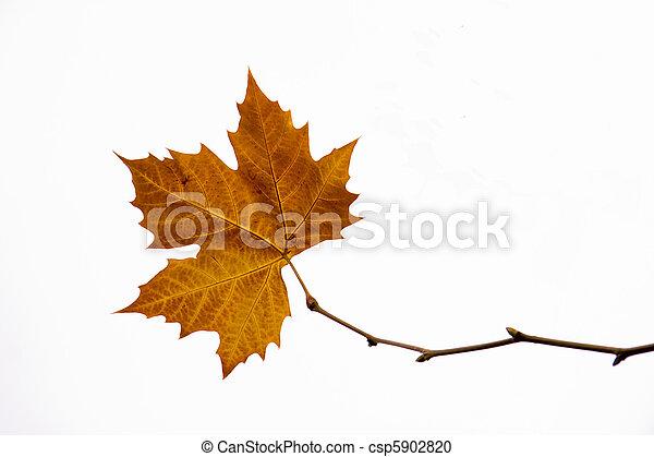 autumn leaf - csp5902820