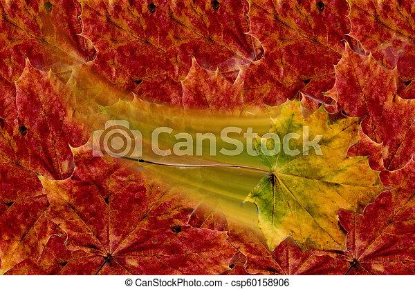 autumn leaf - csp60158906