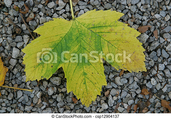 Autumn leaf - csp12904137