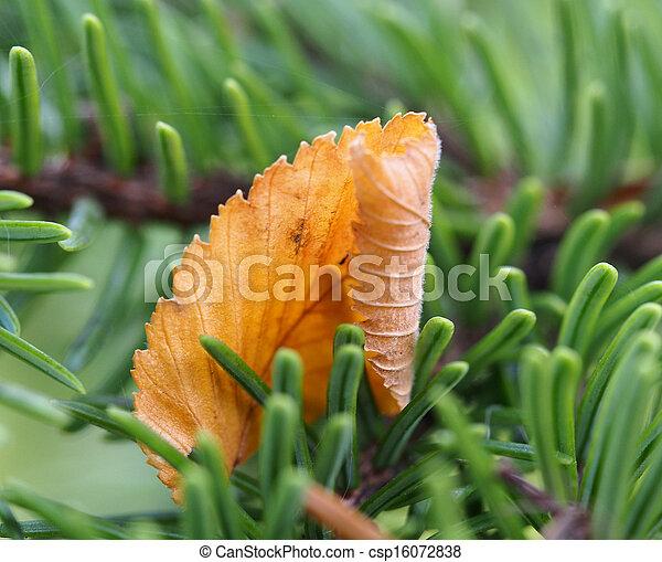 Autumn Leaf - csp16072838