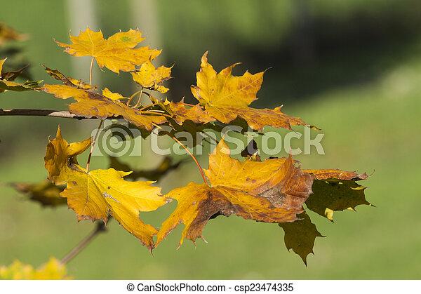 autumn leaf - csp23474335