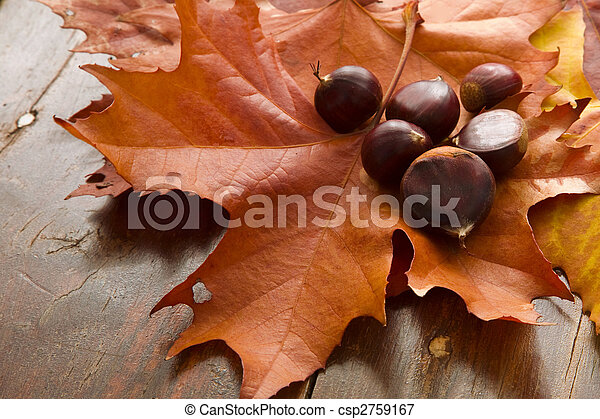 Autumn Leaves and Chestnuts - csp2759167