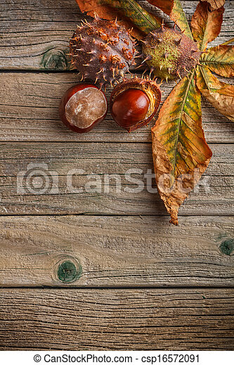 Autumn leaves and fresh chestnuts - csp16572091