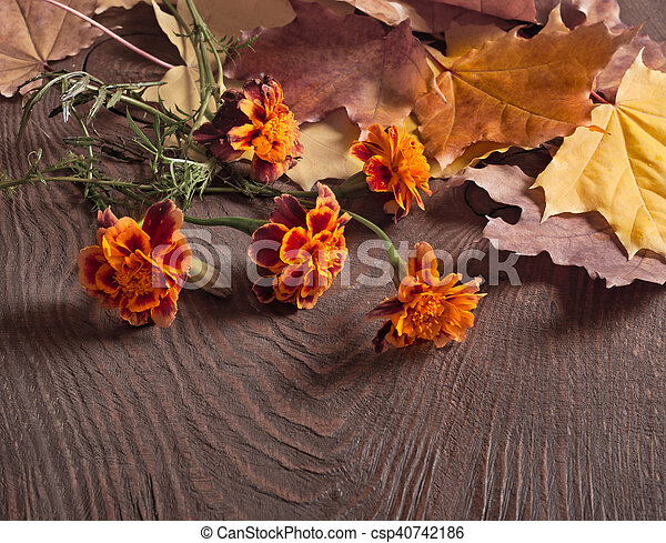 Autumn leaves and Tagetes flowers - csp40742186