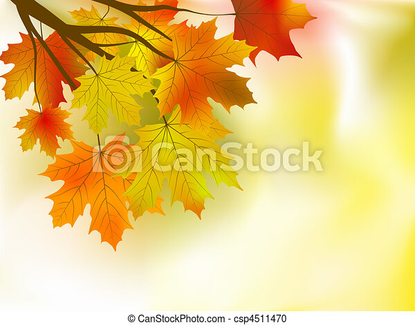 autumn leaves background in a sunny day. - csp4511470