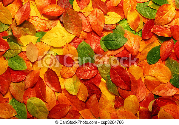 Autumn leaves background - csp3264766
