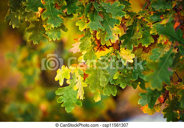 autumn leaves background - csp11561307