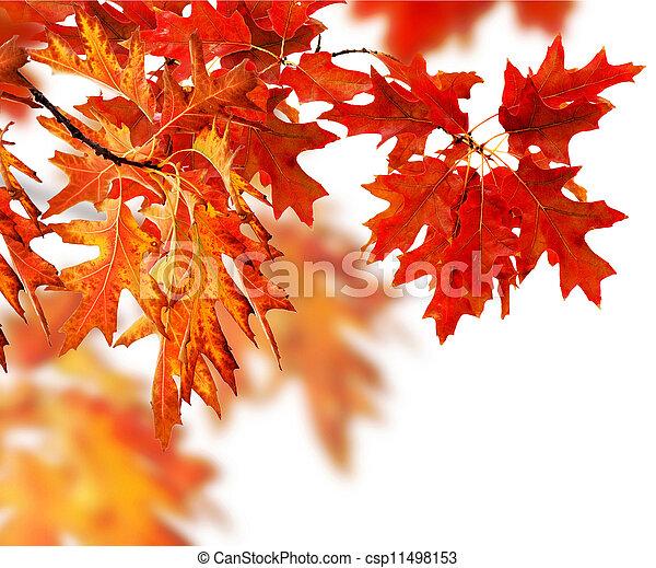 Autumn Leaves Border  - csp11498153