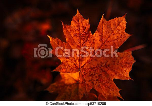 Autumn Leaves Close Up On Dark Background