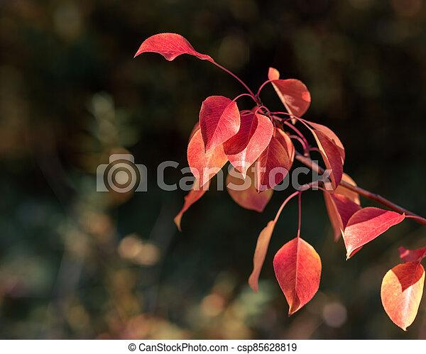Autumn leaves close up - csp85628819