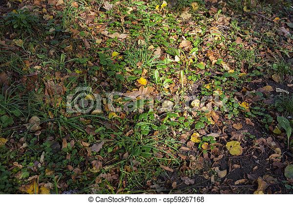 Autumn leaves close up - csp59267168