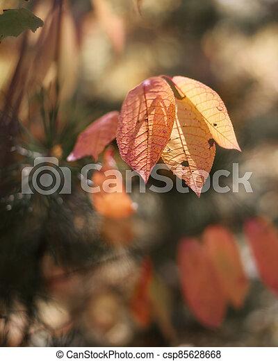 Autumn leaves close up - csp85628668