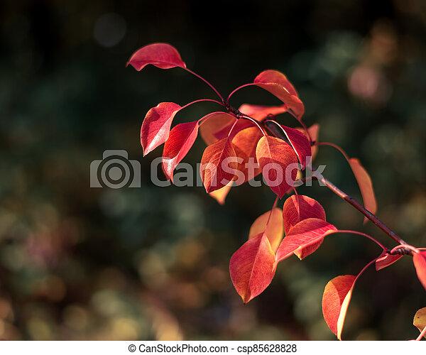 Autumn leaves close up - csp85628828