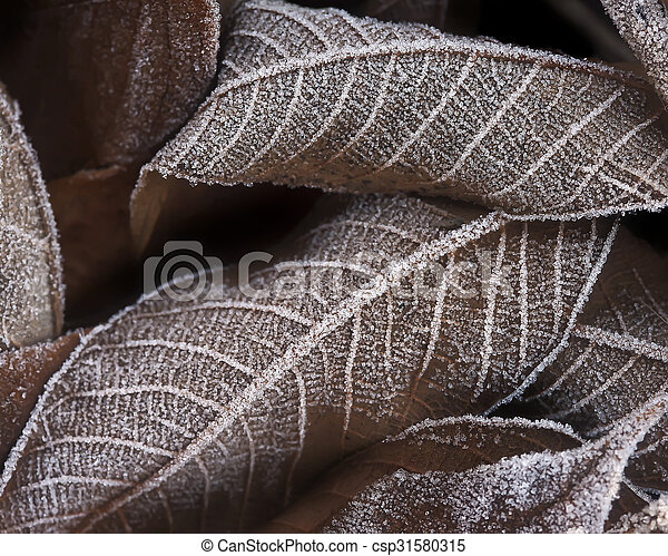 Autumn leaves covered with frost closeup - csp31580315