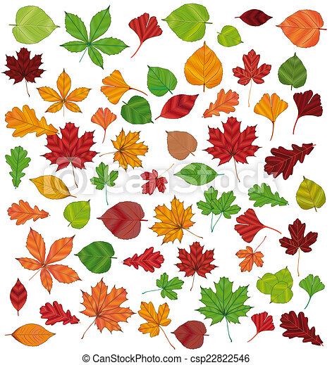 autumn Leaves - csp22822546