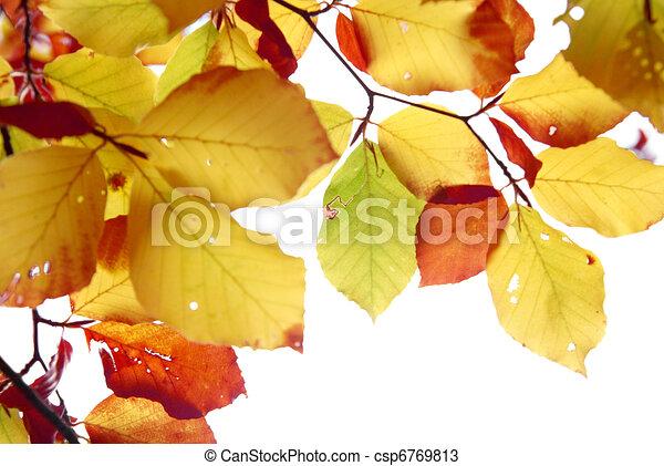 Autumn leaves - csp6769813