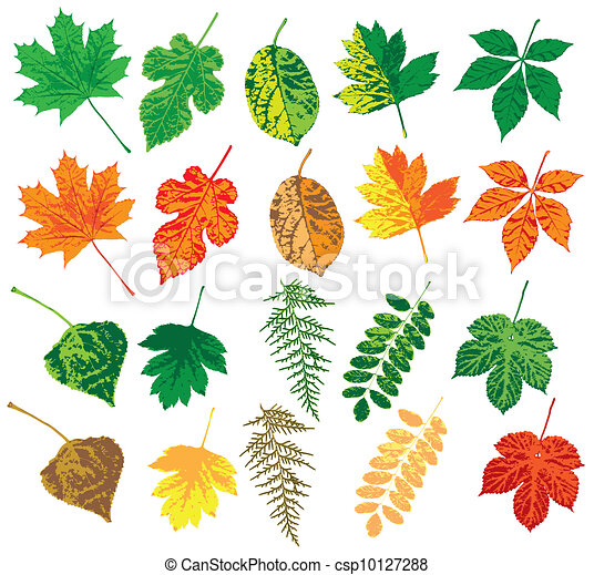 Autumn leaves - csp10127288