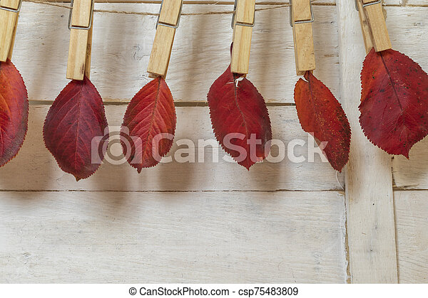 Autumn leaves grasped with a pinch of hemp rope - csp75483809
