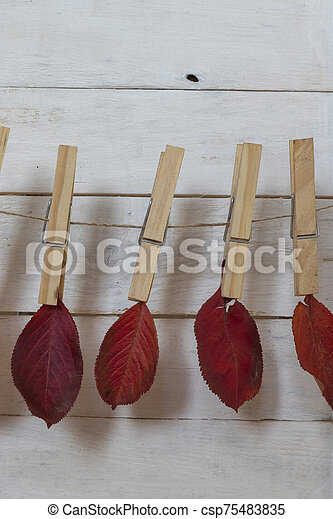 Autumn leaves grasped with a pinch of hemp rope - csp75483835