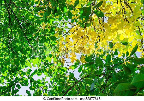 autumn leaves hdr - csp52877616