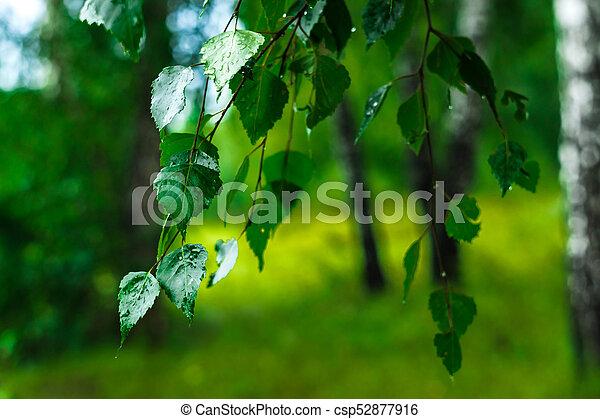 autumn leaves hdr - csp52877916
