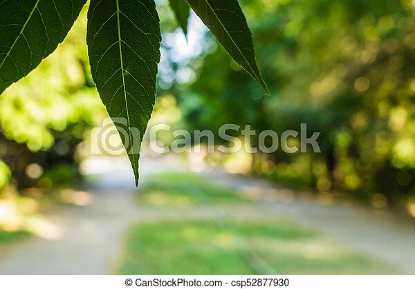 autumn leaves hdr - csp52877930