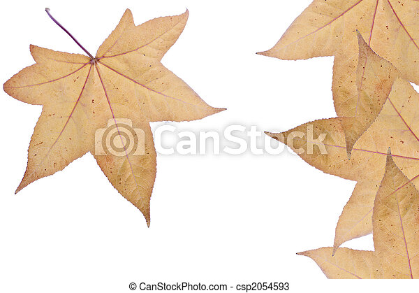 autumn leaves, herfst - csp2054593