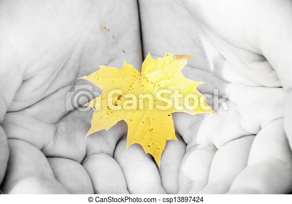 autumn leaves in the hands of men - csp13897424
