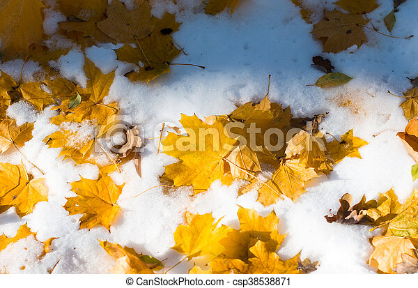 autumn leaves in the snow - csp38538871