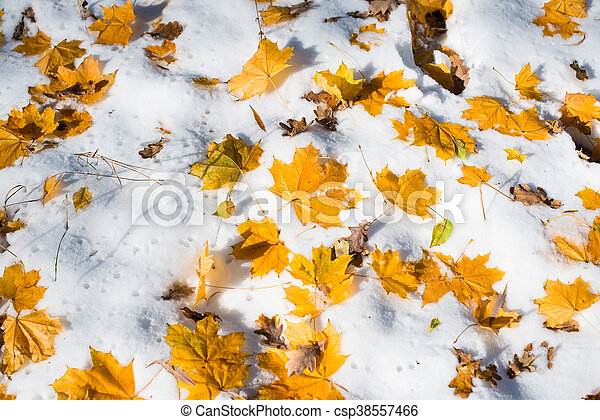 autumn leaves in the snow - csp38557466