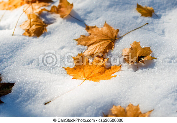 autumn leaves in the snow - csp38586800