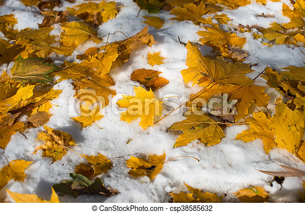 autumn leaves in the snow - csp38585632