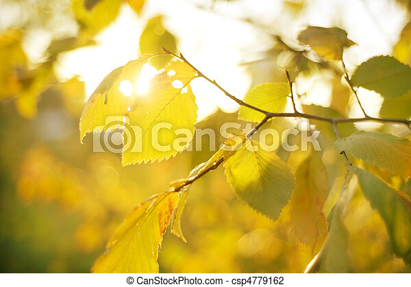 Autumn Leaves in the sunshine day - csp4779162