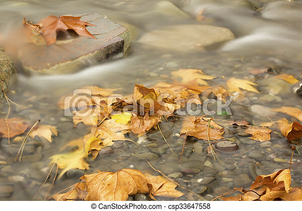 Autumn leaves in the water - csp33647558