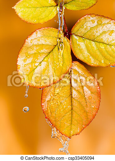 Autumn leaves in water - csp33405094