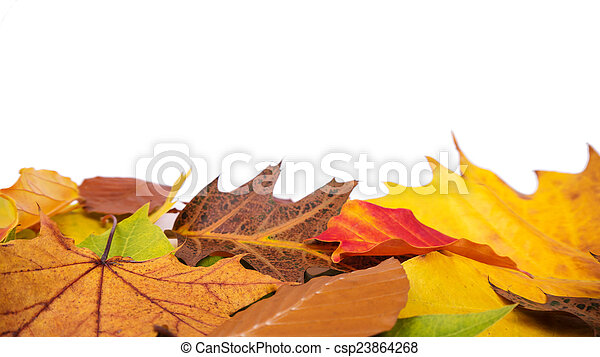 autumn leaves isolated - csp23864268
