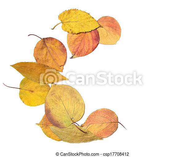 autumn leaves on a white background - csp17708412