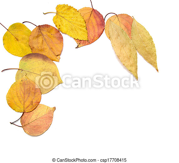 autumn leaves on a white background - csp17708415
