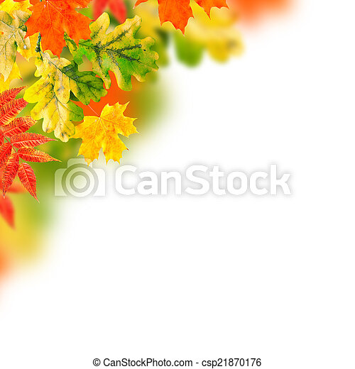 Autumn leaves on a white background - csp21870176
