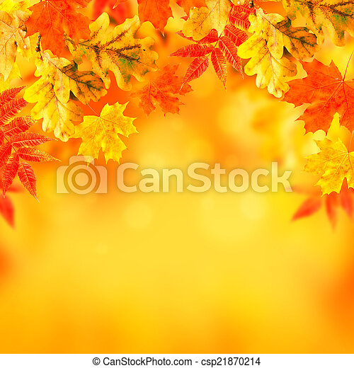 Autumn leaves on a white background - csp21870214
