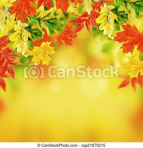 Autumn leaves on a white background - csp21870215