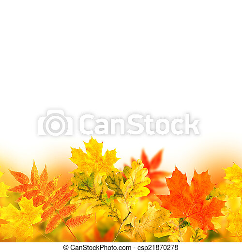 Autumn leaves on a white background - csp21870278