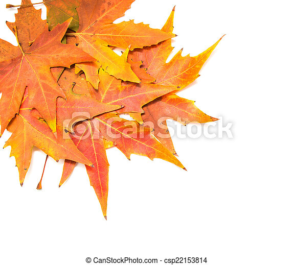 autumn leaves on a white background - csp22153814