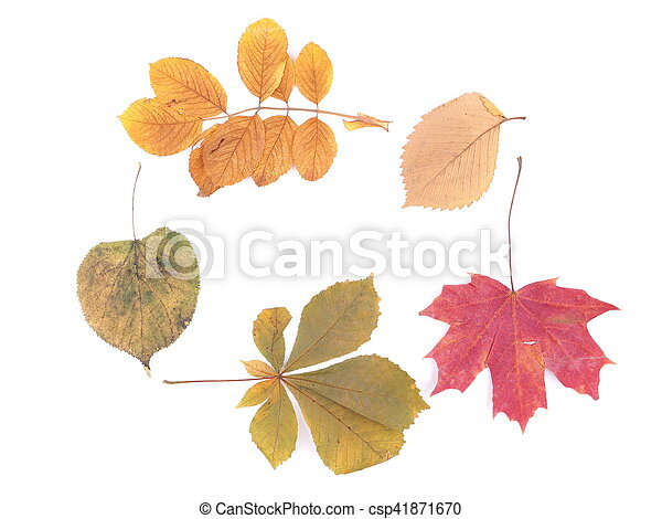 autumn leaves on a white background - csp41871670