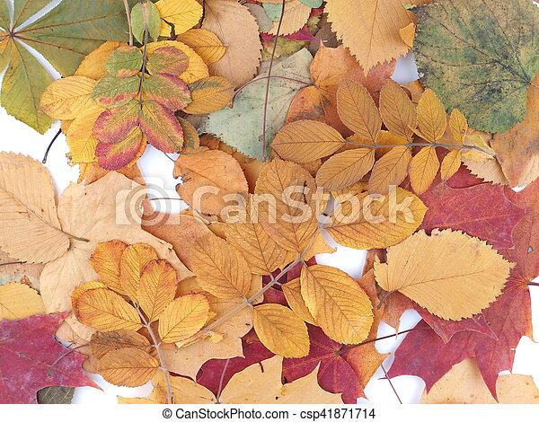 autumn leaves on a white background - csp41871714