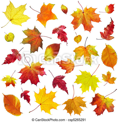 Autumn leaves on a white background - csp5265291